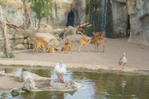 ducks deer bioparc