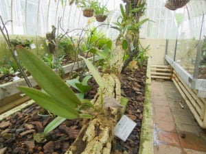plant building jardin botanico