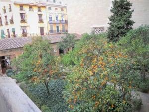 orange trees la lonja de la seda