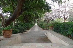 Jardines de Monforte tree-lined road