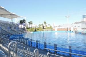 Dolphin aquarium