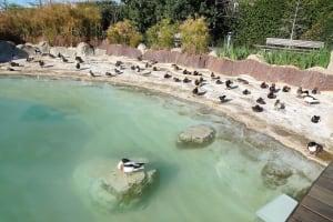 L'Oceanografic ducks