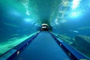 L'Oceanografic underwater tunnel
